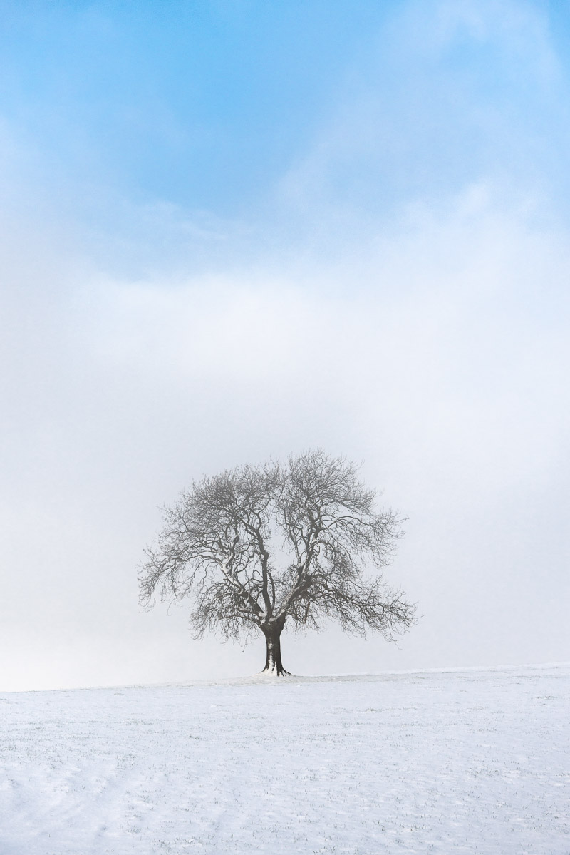 Deerleap Tree in Snow - Deerleap, Somerset, UK. ID JB1_2518