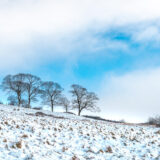 Snow - Lynchcombe, Mendip Hills, Somerset, UK. ID JB1_2920