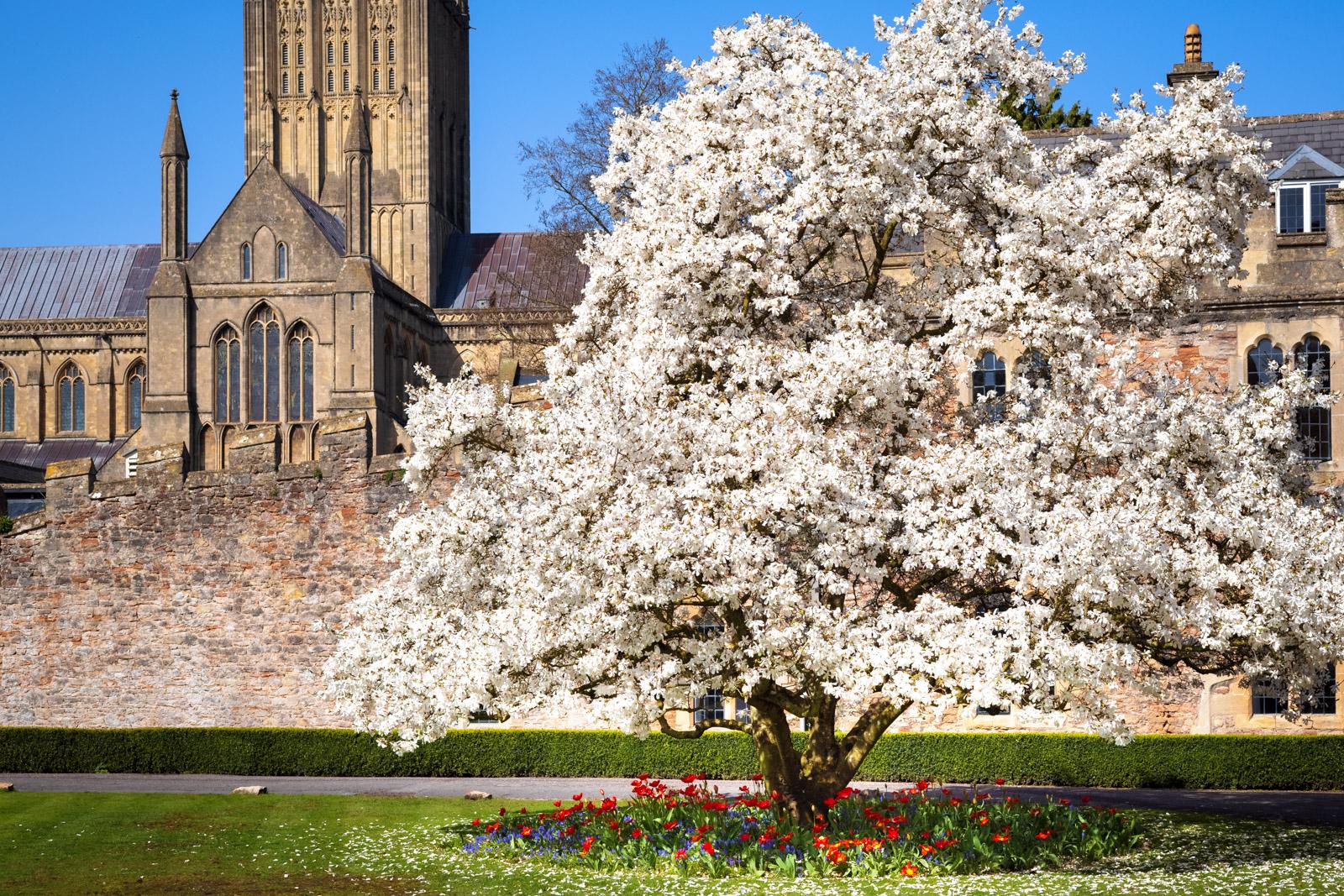 Marvellous Magnolia