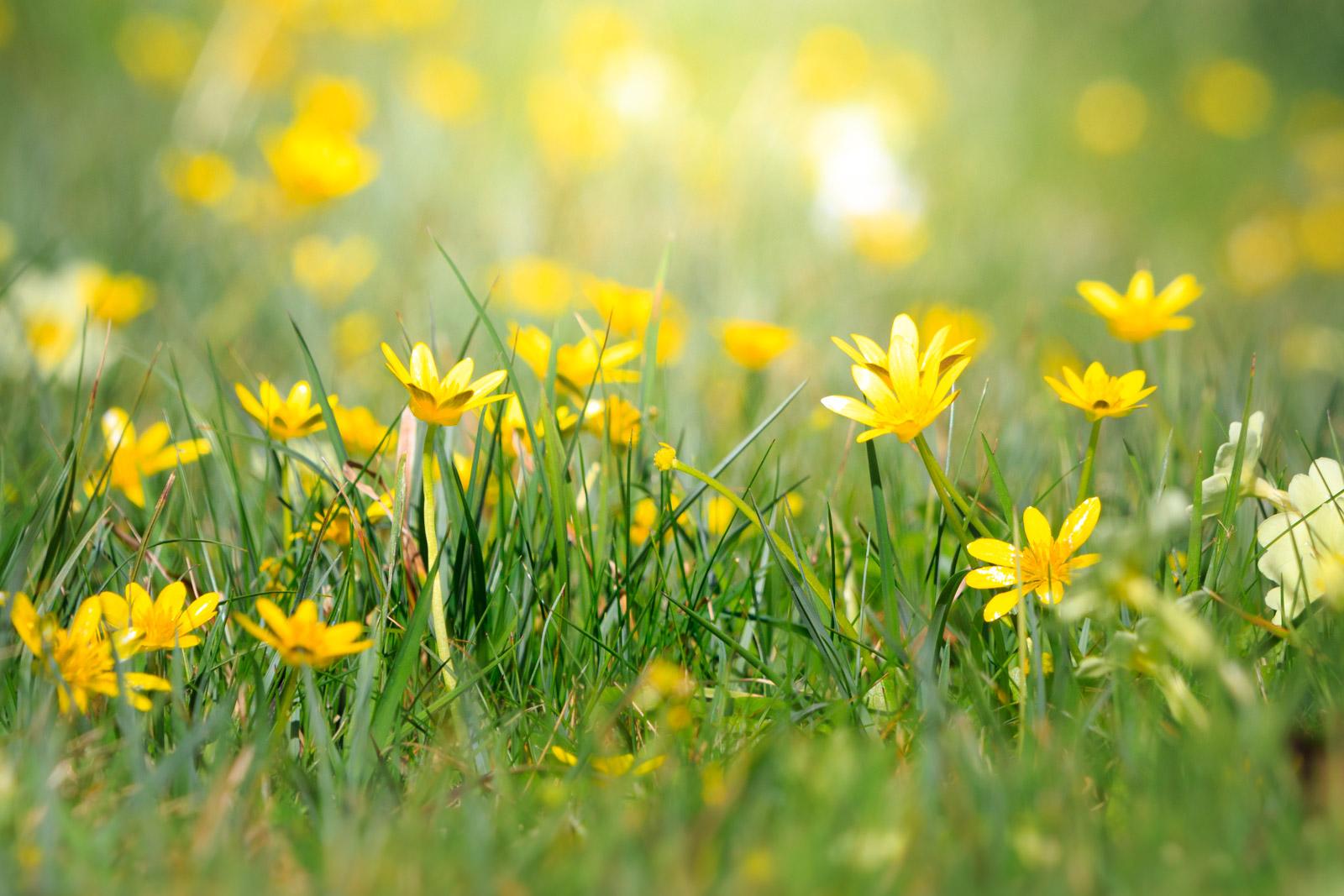 Churchyard Flowers - Henton, Somerset, UK. ID IMG_9401