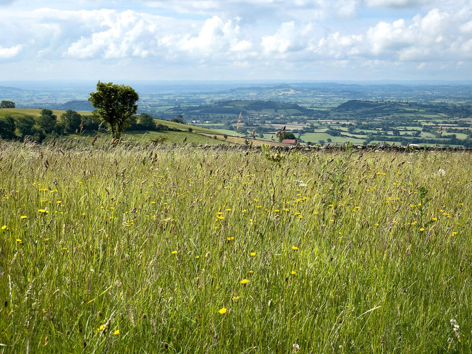 Mendip Meadow - Cooks Fields, Mendip Hills, Somerset, UK. ID IMG_3913