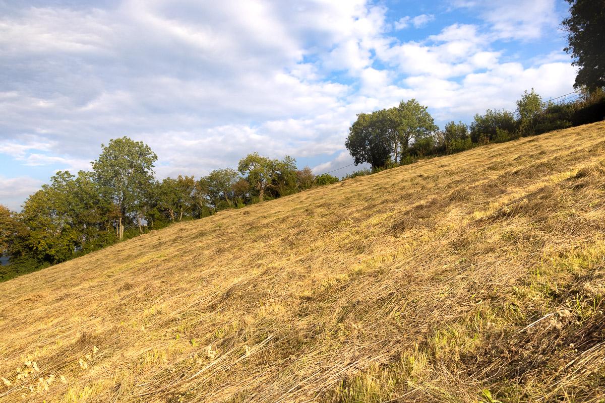 The steep bit - Bagley Fields, Nr Wedmore, Somerset, UK. ID BR56615