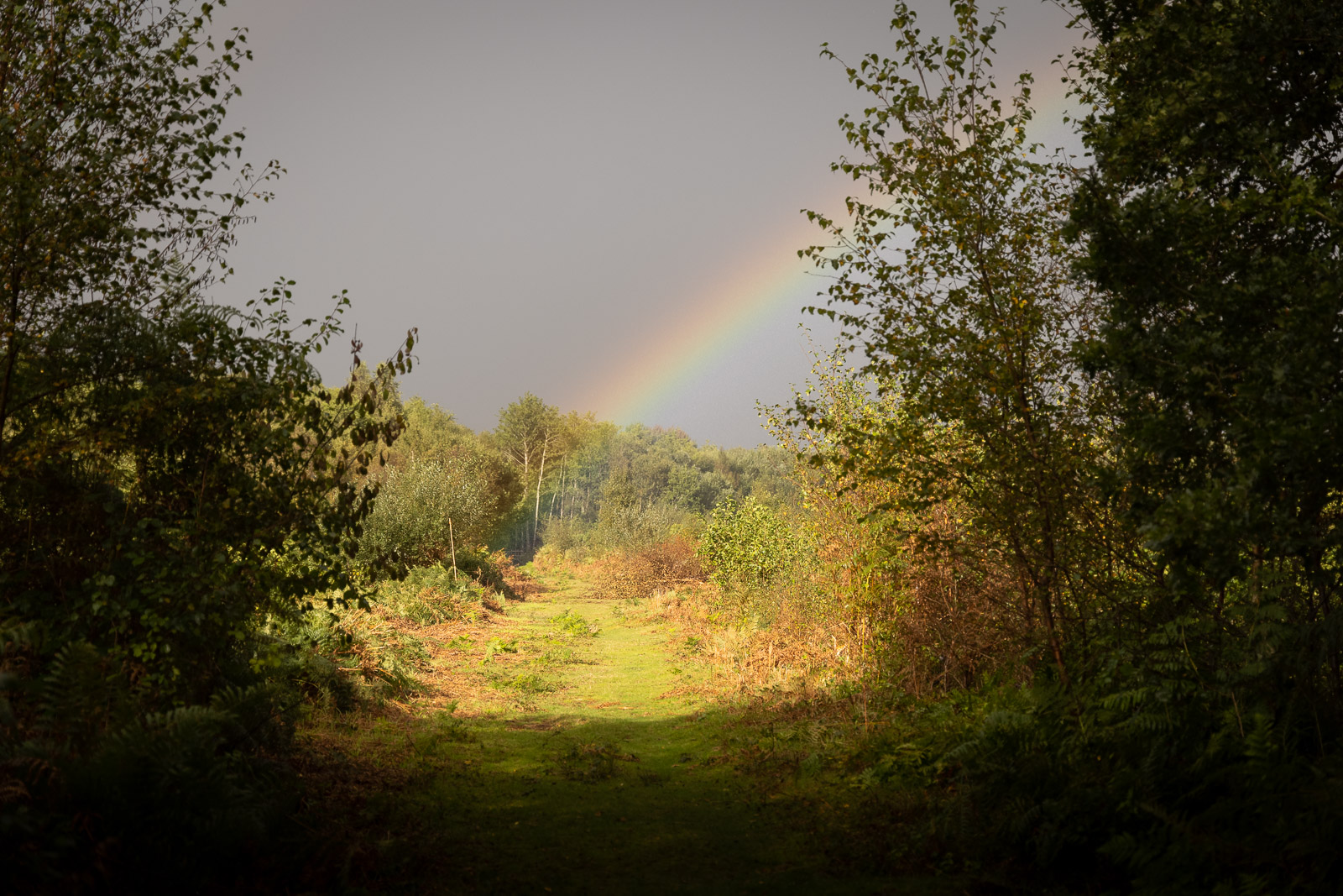Rainbow over the mire - Westhay, Somerset, UK. ID BR57707
