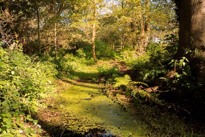 Wet Footpath - Westhay Moor, Somerset, UK. ID BR58447