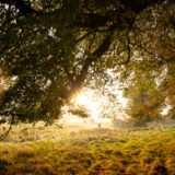 Beech Trees - Pelting Drove, Nr Priddy, Somerset, UK. ID BR59271P