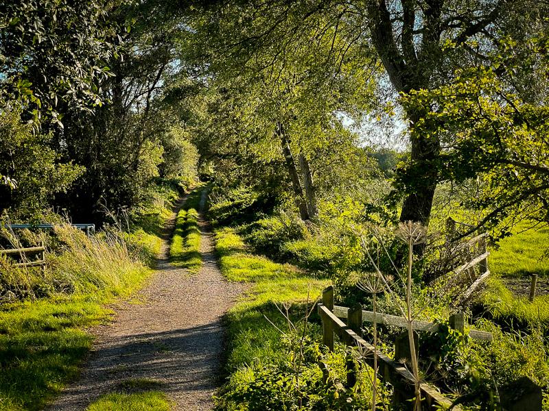 Westhay - Somerset, UK. ID IMG_5637