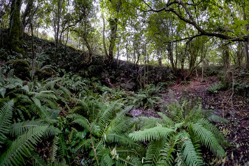 Ramspit Swallet - Lynchcombe, Mendip Hills, Somerset, UK. ID IMG_5902P