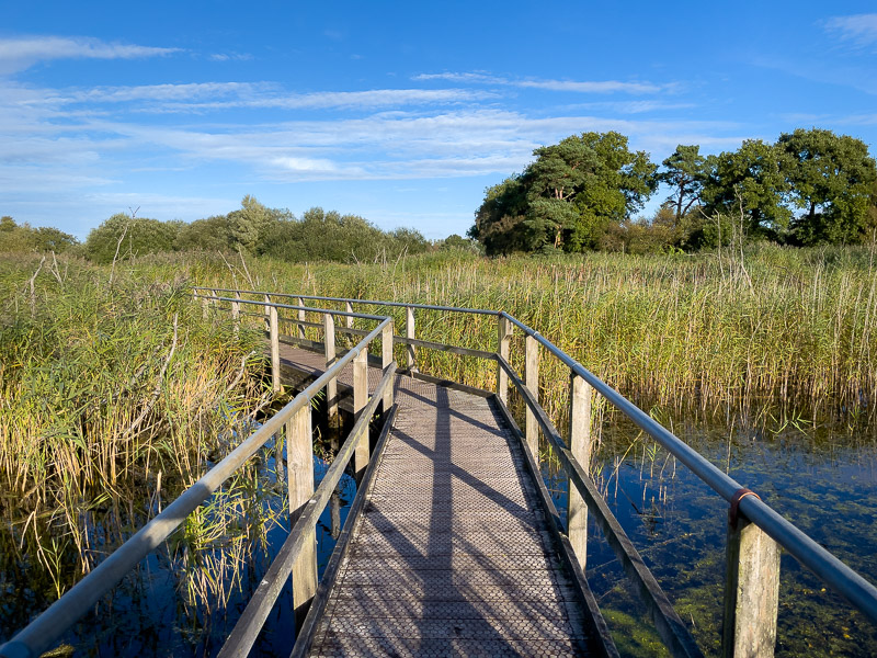 Path to the Island Hide - Wethay Moor, Somerset, UK. ID IMG_6039