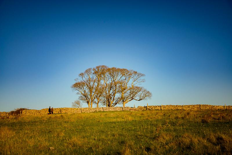 Evening Walk - Cooks Fields, Mendip Hills, Somerset, UK. ID JB1_8728